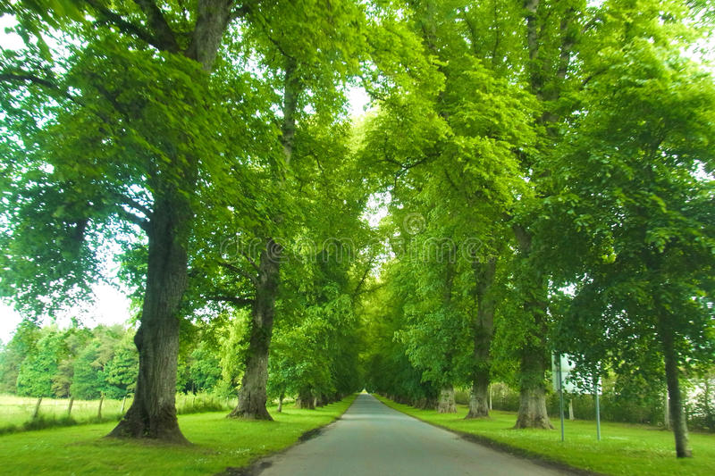 A Tree Lined Road. A picturesque tree lined road leading through farms and paddocks. striking green leaves on a beautiful summers day stock images