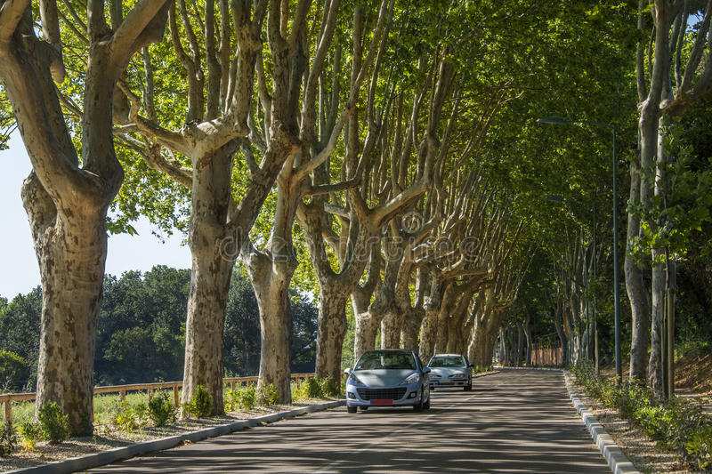 Cars on tree lined road - South of France royalty free stock image