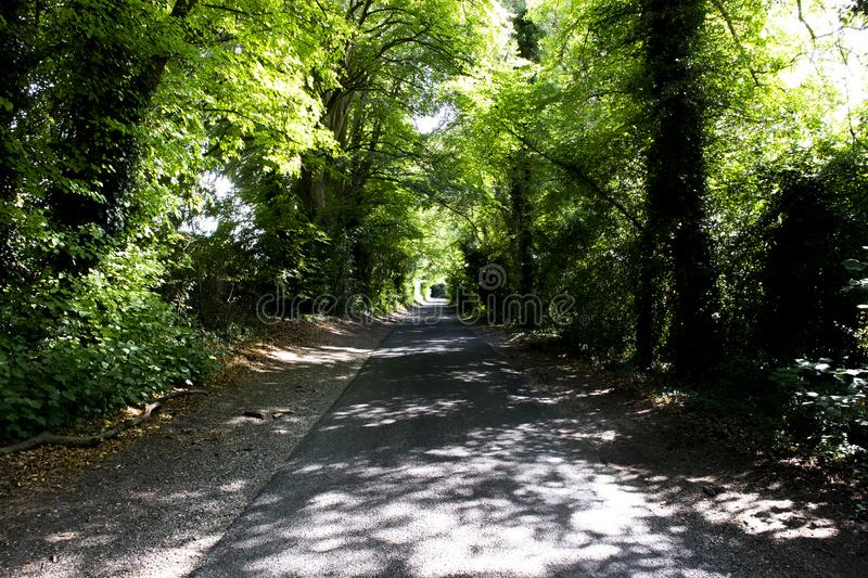 Tree lined singe lane. Country lane dappled with summer sunlight shining through the canopy stock photo