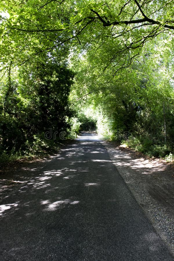 Tree lined singe lane. Country lane dappled with summer sunlight shining through the canopy royalty free stock photos