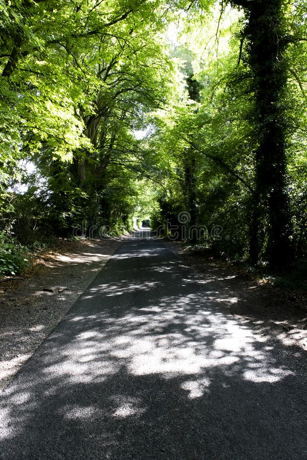 Tree lined singe lane. Country lane dappled with summer sunlight shining through the canopy stock images