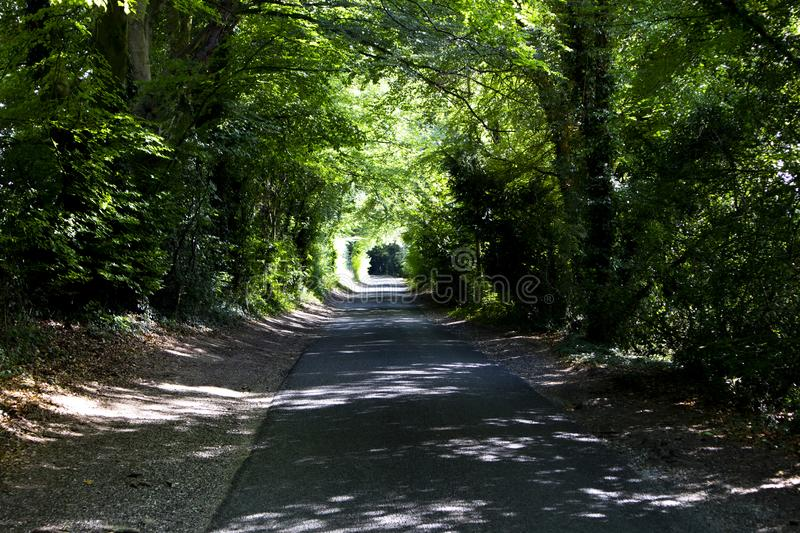 Tree lined singe lane. Country lane dappled with summer sunlight shining through the canopy stock photos
