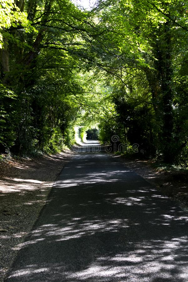 Tree lined singe lane. Country lane dappled with summer sunlight shining through the canopy stock photography