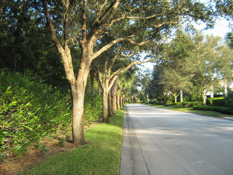 Tree-Lined Street royalty free stock photography