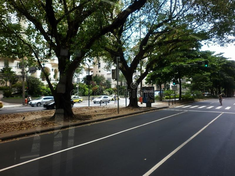 Tree lined streets royalty free stock photography