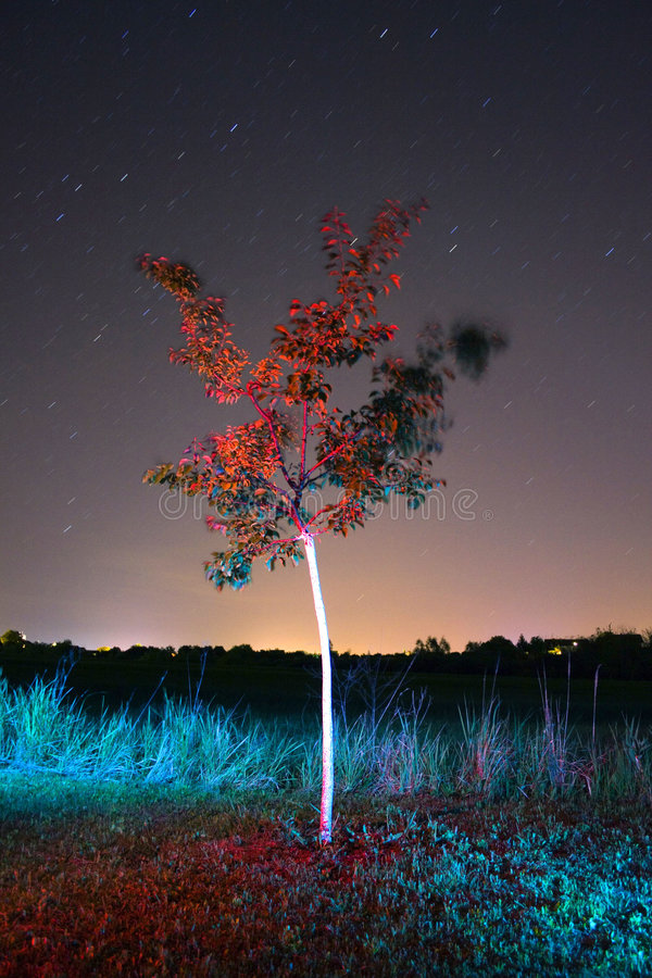 Tree lit at night royalty free stock photos