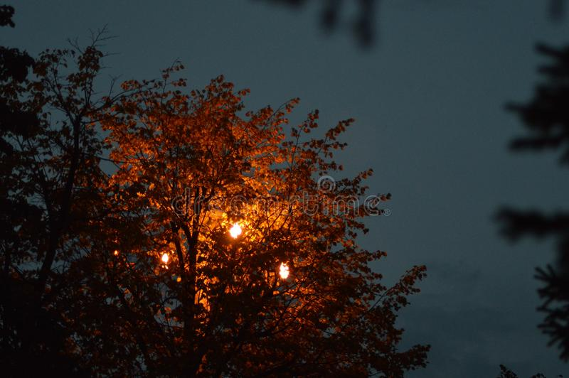 Tree lit by a street lamp stock images