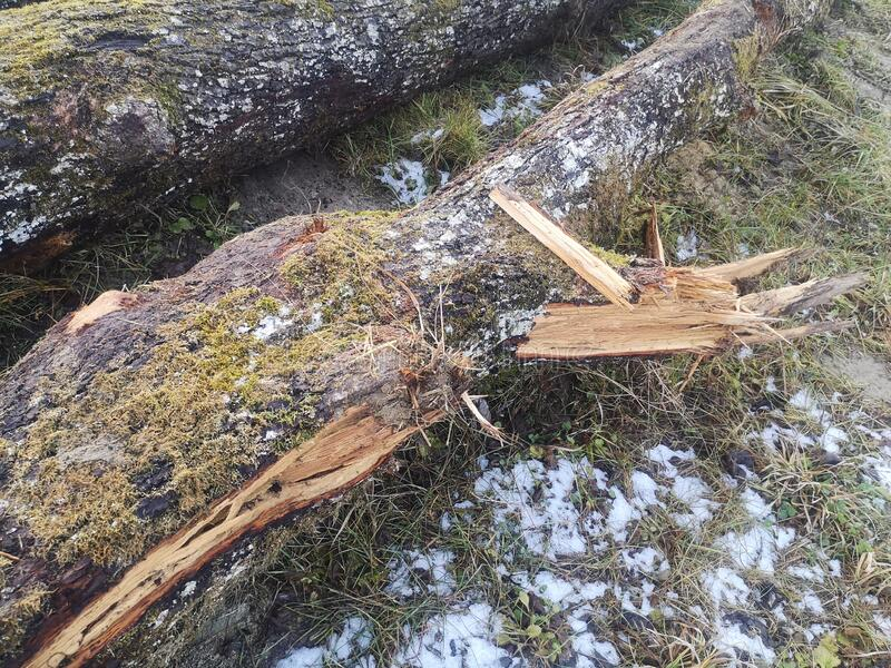 Tree log, broken, green, wood, beautiful royalty free stock photography