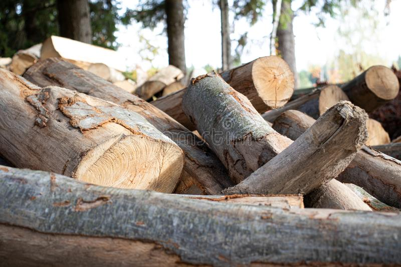 Tree logs pile forest wood carpentry royalty free stock photos