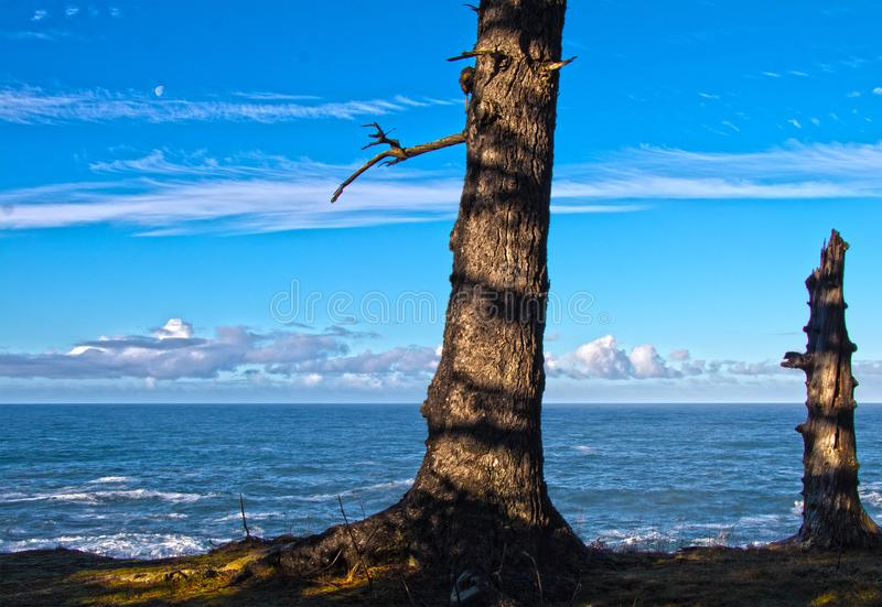 A trees ocean view of the moon stock photography