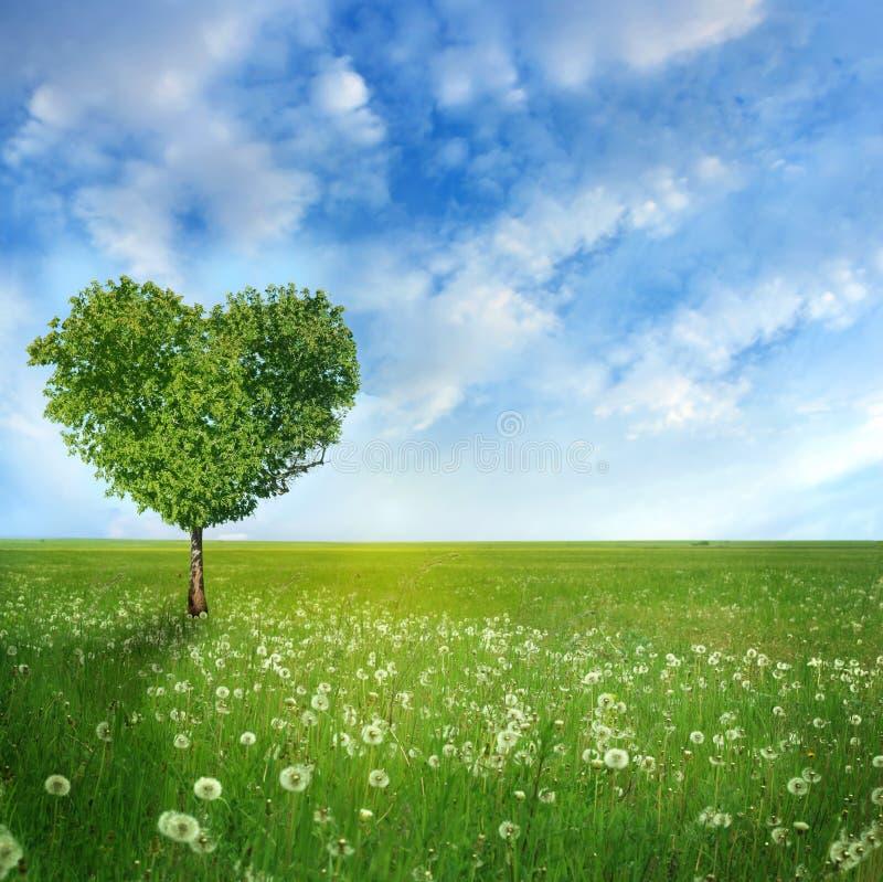 Tree of love. On dandelions field stock photography