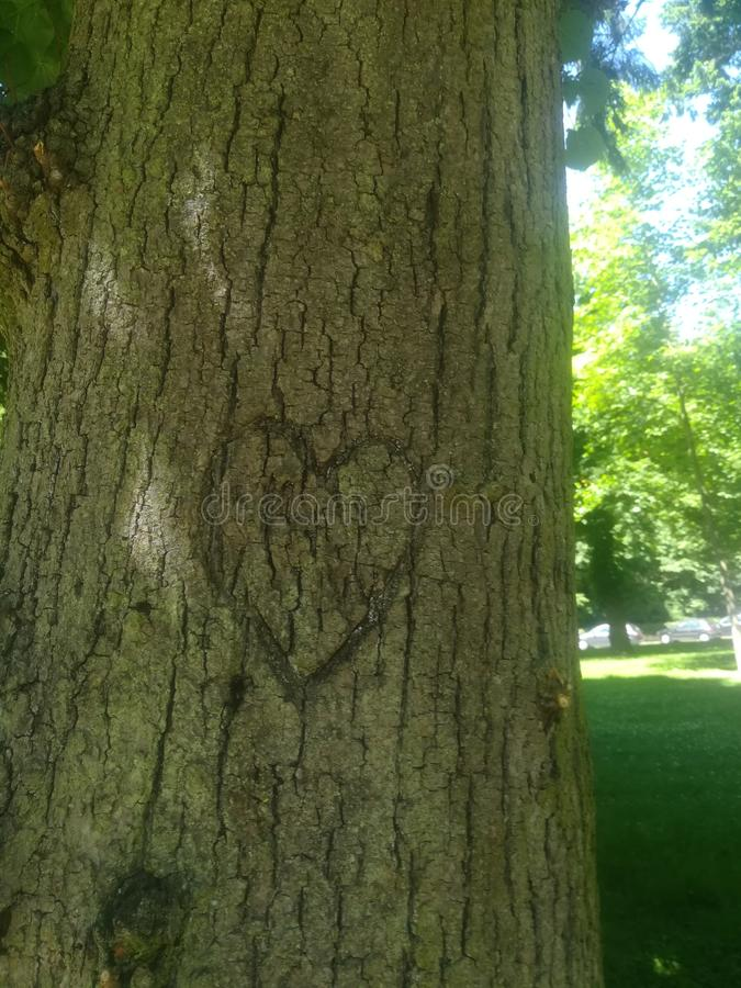 Tree love nature royalty free stock images