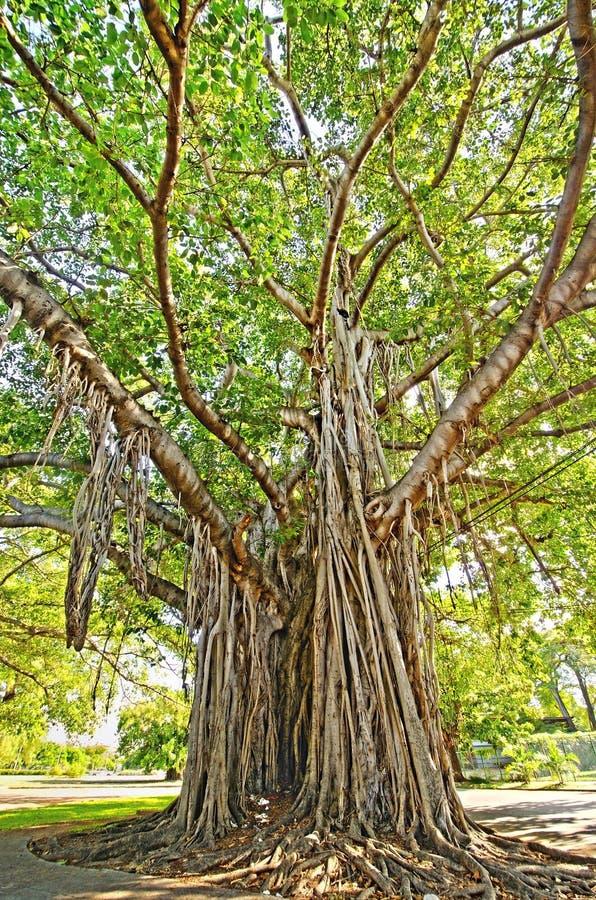 Download Tree with lush foliage stock photo. Image of vegetation - 12285698
