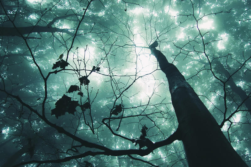 Tree in a magical forest royalty free stock photography