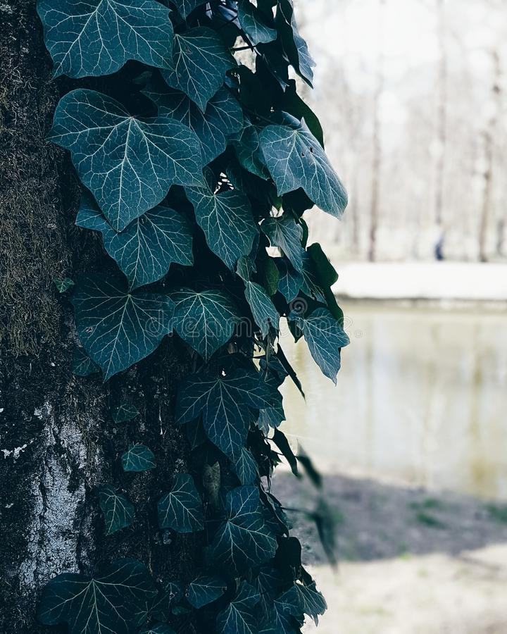 Tree in Maksimir park in Zagreb royalty free stock photos