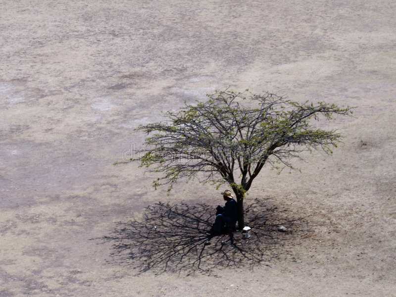 Tree and man in desert plain. A man is sitting under a tree in bright desert light in Mexico. The desolation of the arid plain contrasts the lively tree branches stock photo