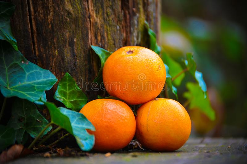 TREE MANDARIN ,leaves, nature, healthy food, diet stock photography