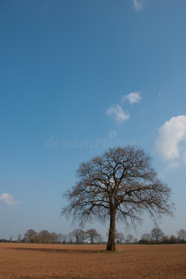Tree in marshes royalty free stock photo