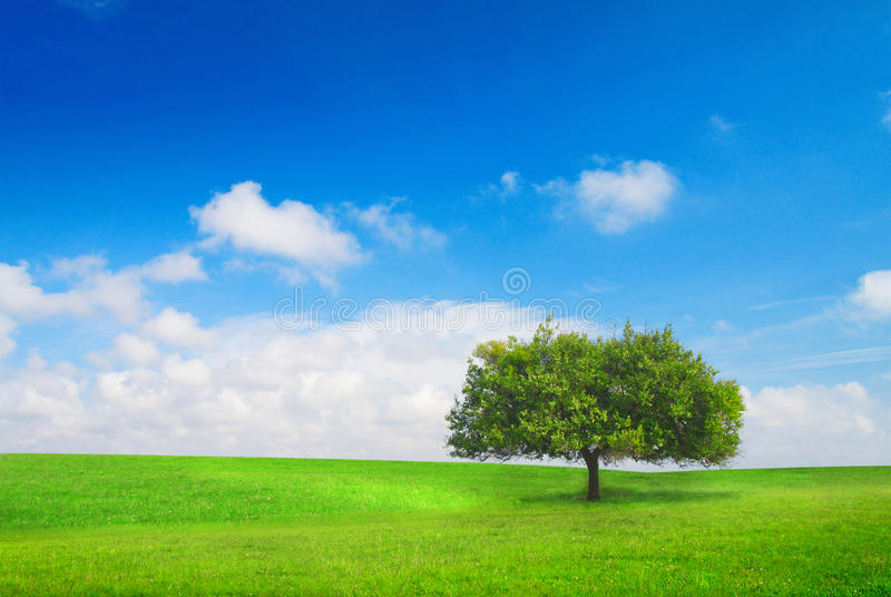 Tree on meadow royalty free stock photography