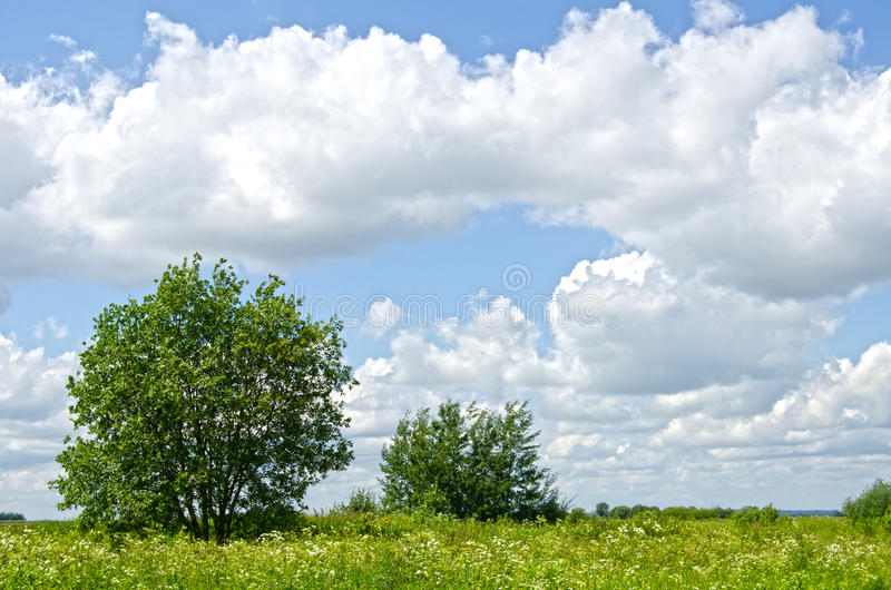 Tree in a meadow on nice summer day stock photography