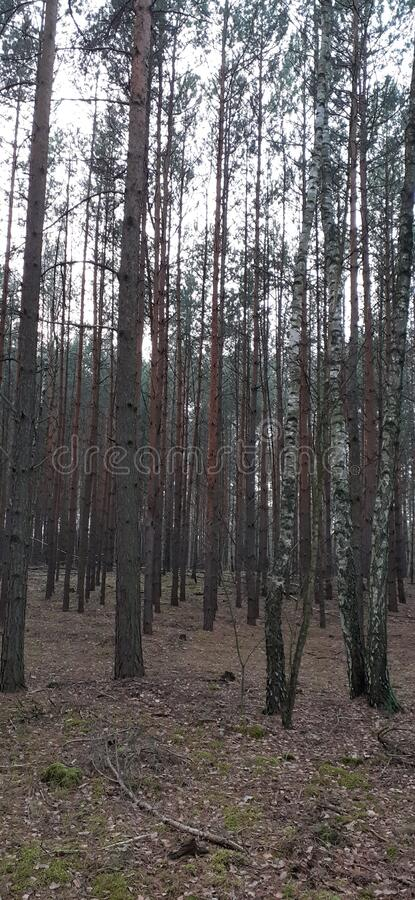 Tree on the meadow, spring morning royalty free stock image