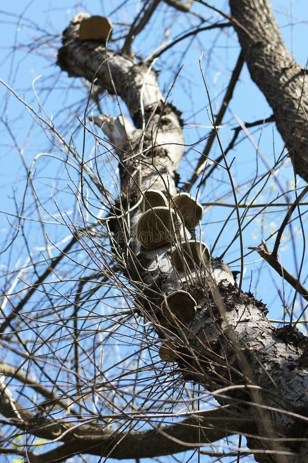 Tree med champinjoner arkivbild
