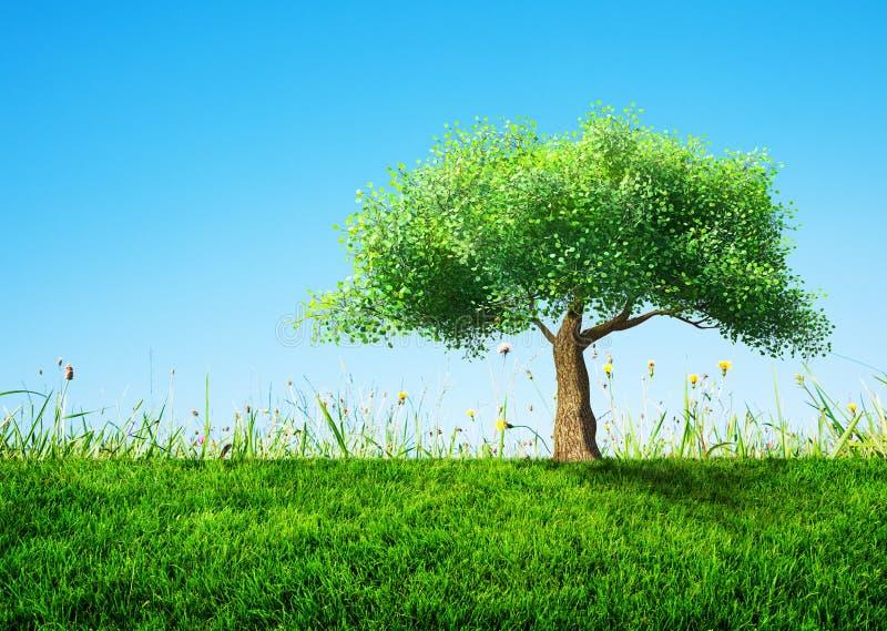 Tree med gräs fotografering för bildbyråer