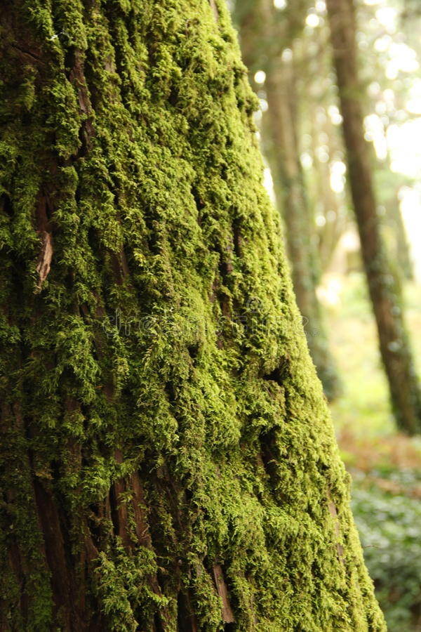 Tree med moss royaltyfria bilder