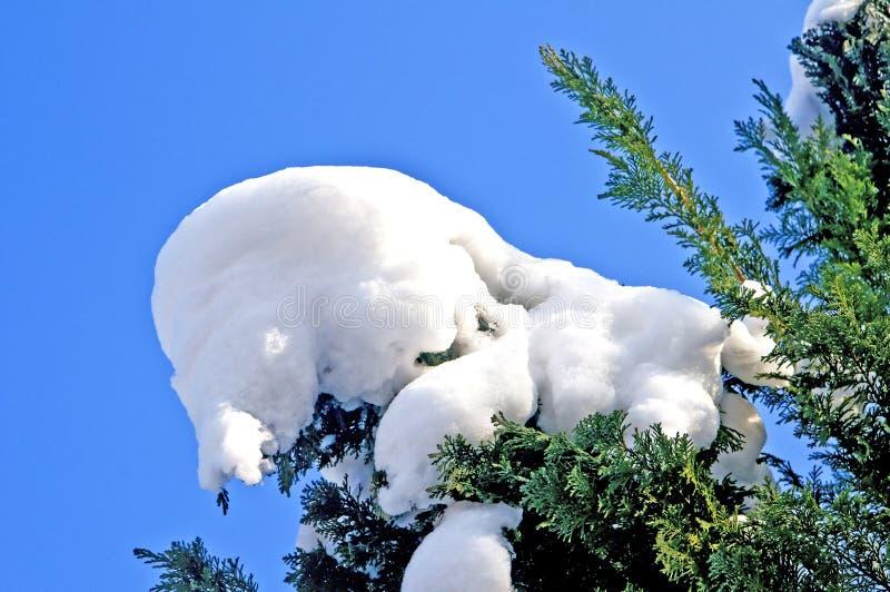 Tree med snow arkivfoto