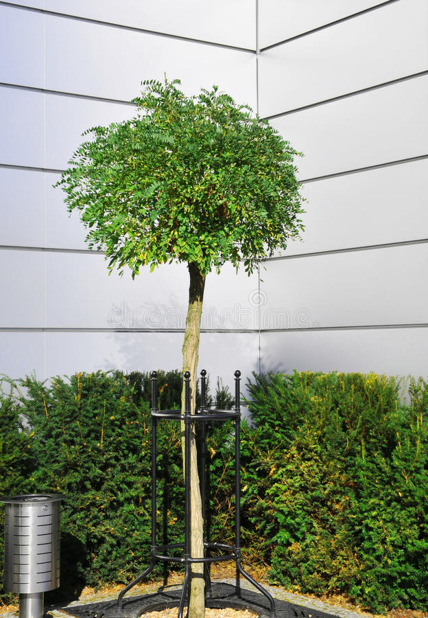 Download Tree In The Metal Environment Stock Image - Image: 12019465