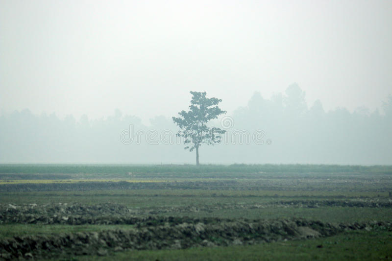 Tree in the mid field stock photo
