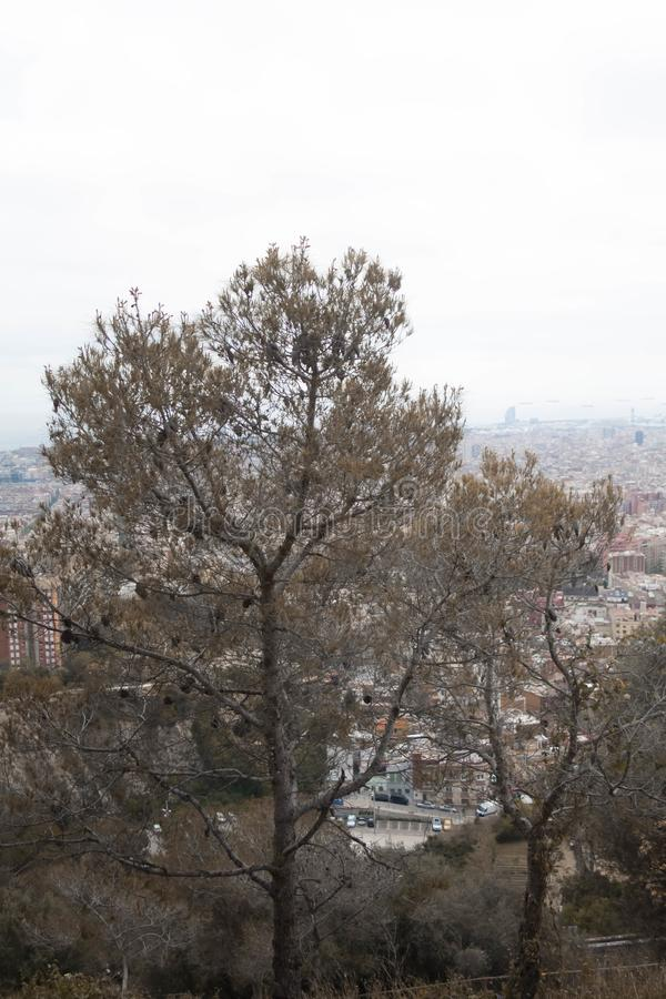 A tree in a middel of the view. Of Barcelona, Spain stock photos