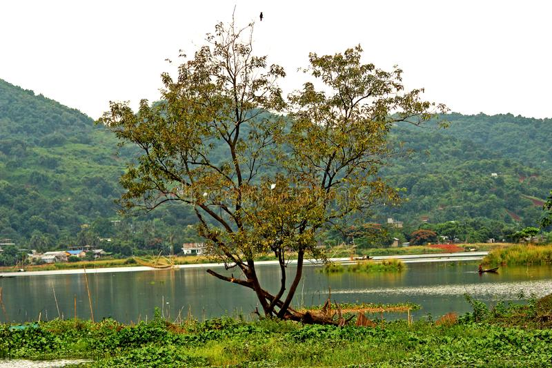 A tree in the middle of calm water and birds are sitting on it, Assam India. A tree in the middle of calm water and birds are sitting on it royalty free stock images