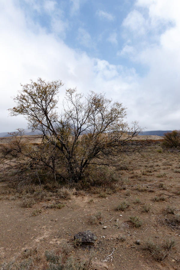 Tree In The Middle Of Nowhere - Fraserburg Landscape royalty free stock photos