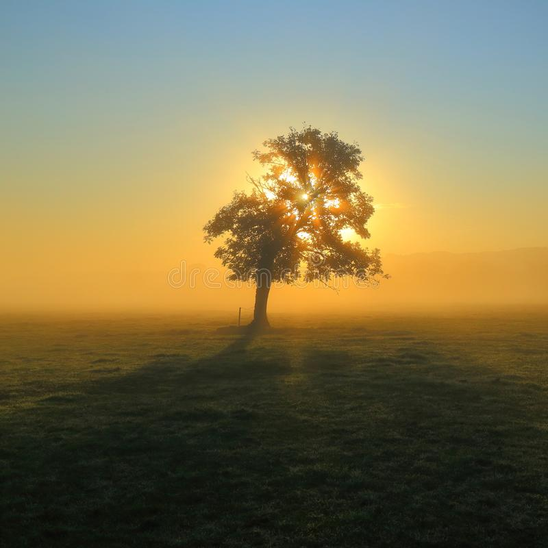 Tree in the misty morning stock image