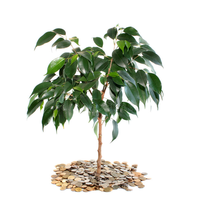 Download Tree on money, isolated. stock photo. Image of contributions - 10955588