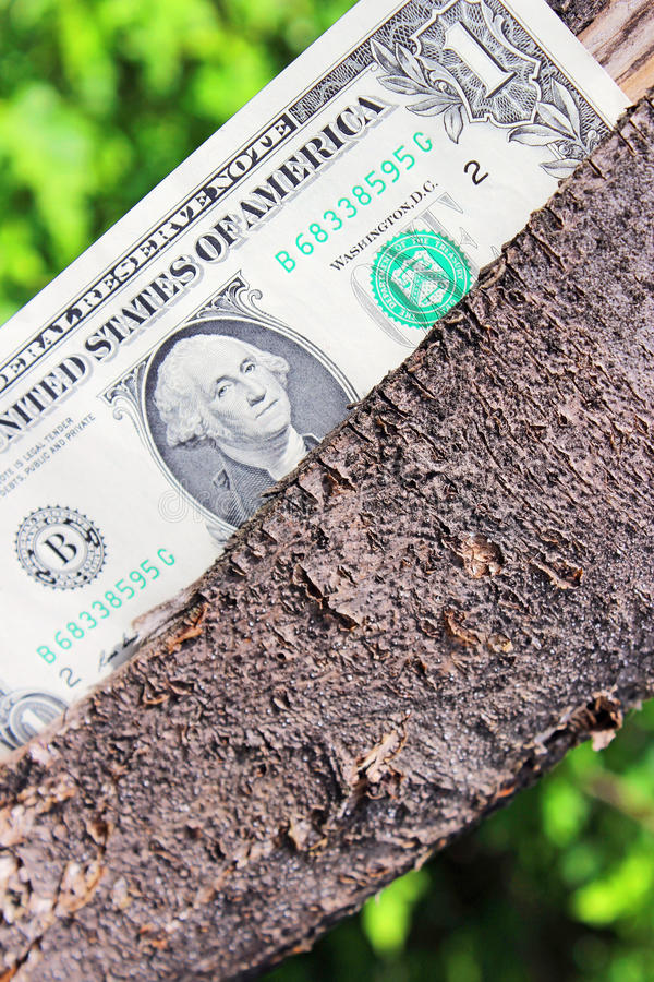 Download Tree With Money Stock Photos - Image: 31370523
