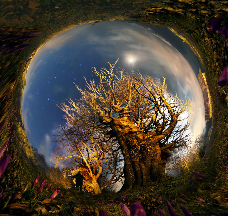 Tree - a monster in the night stock photo