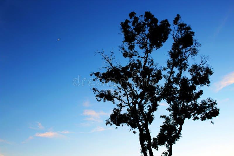 Tree and the moon stock photos