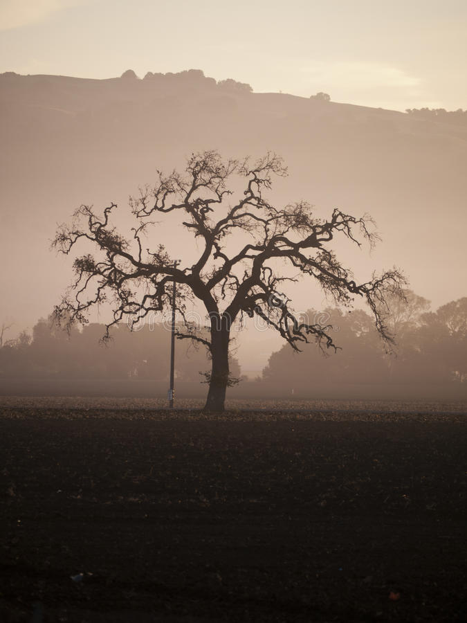 Download Tree In The Morning Fog Stock Photo - Image: 27563940