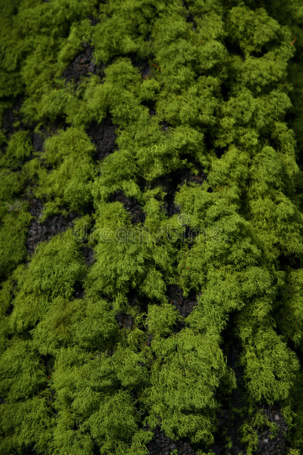 Tree Moss and Bark royalty free stock image