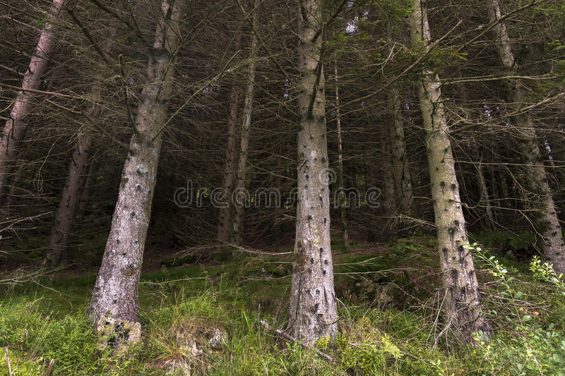 Tree with moss Norway stock images