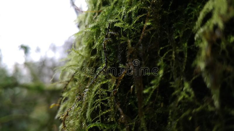 Tree moss and vegetation royalty free stock photos