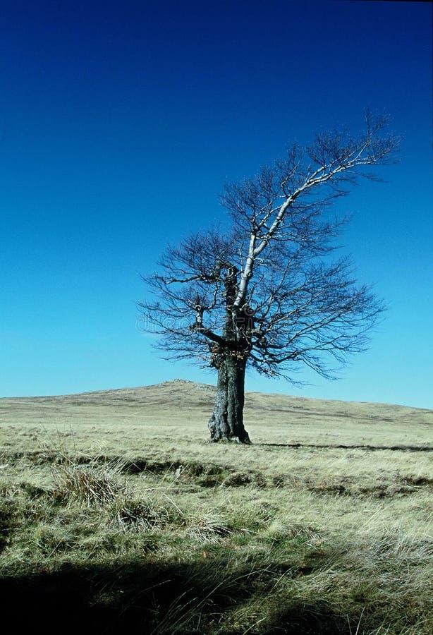 Tree and mountain stock photo