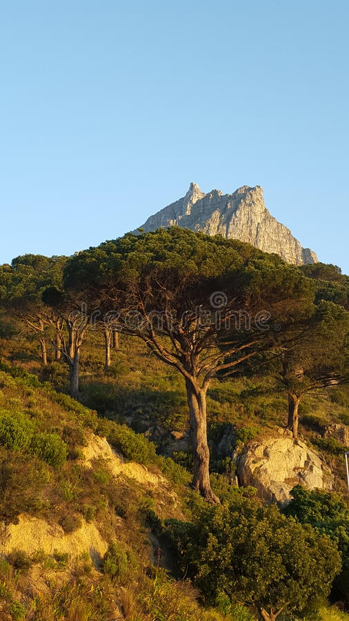 Tree on Mountain royalty free stock images