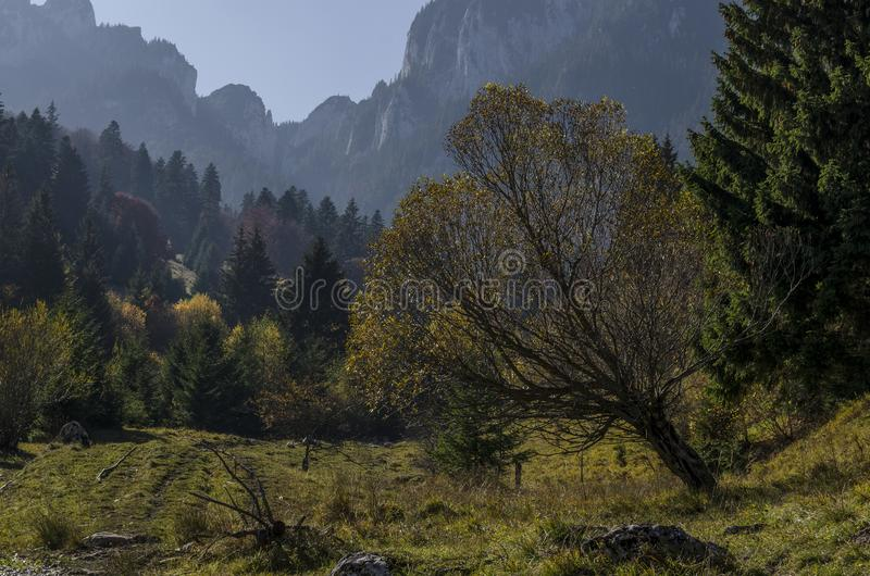 tree in a mountain valley with rocky crest in background stock photo