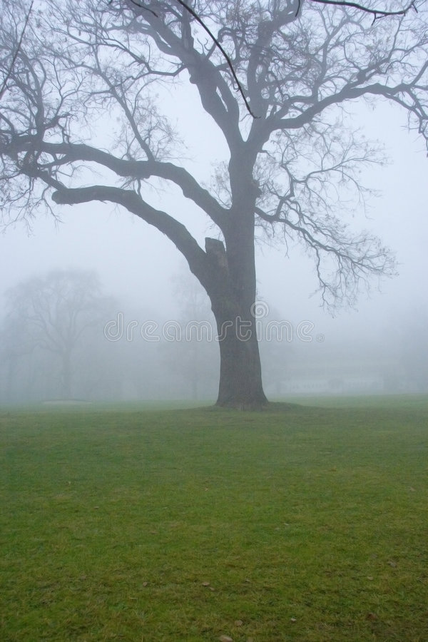 Tree in the myst royalty free stock photos