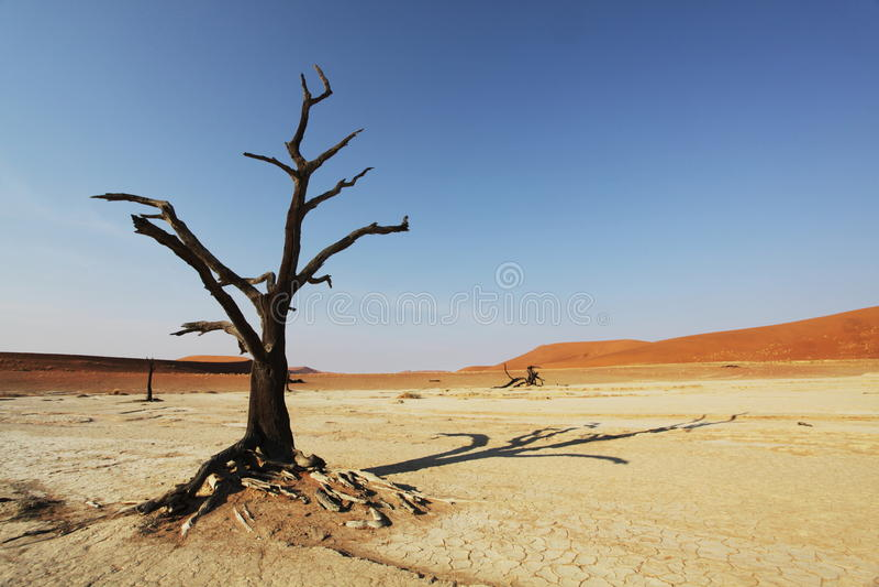 Download Tree in Namib desert stock image. Image of cemetery, scenery - 11280071