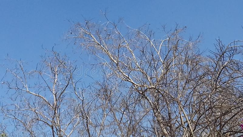 Tree narture beauty scence royalty free stock photo