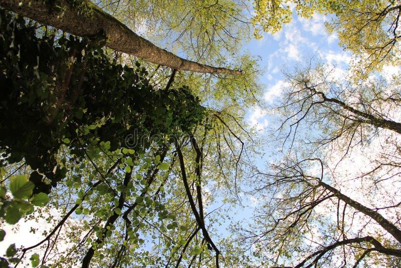 Tree, Nature, Branch, Leaf Free Public Domain Cc0 Image